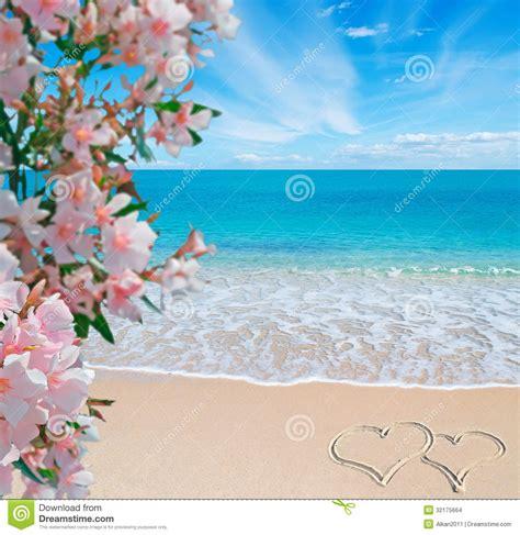 i fiori mare fiori mare e cuori immagini stock immagine 32175664