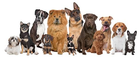 top house dog breeds top 10 large dog breeds dog breeds picture