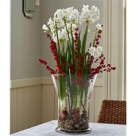 Paperwhite Vase by Paperwhite Ariel Winter Solace Kit White Flower Farm