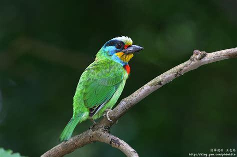 birds in taiwan fm forums