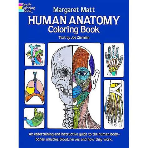 Human Anatomy Coloring Book Matt Margaret Archive