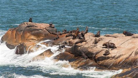 Sea Lions   Pictures, posters, news and videos on your pursuit, hobbies, interests and worries