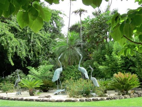 geelong botanic gardens gardens botanical and open gardens pinter