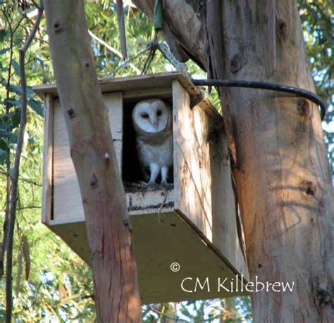 how to make an owl box barn owl nest box for sale woodworking projects plans