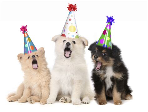 puppy birthday happy birthday to meeeee my as