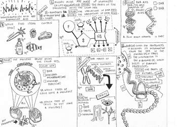 activity 3 carbohydrates puzzle answers worksheet biomolecules worksheet hunterhq free