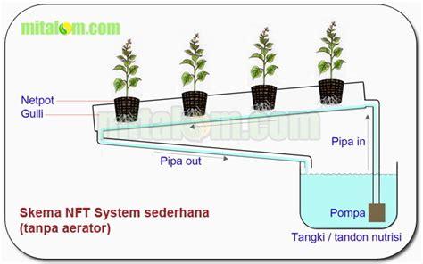 cara membuat guli hidroponik 10 cara tepat dan mudah menanam tomat hidroponik subur