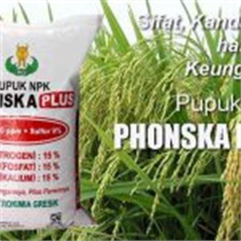 menanam oyong hidroponik 7 tahap mudah cara menanam bawang merah hidroponik sederhana