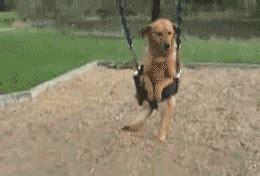 swing animated gif dog animated gif