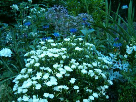 pretty moon garden plants gardening and outdoors
