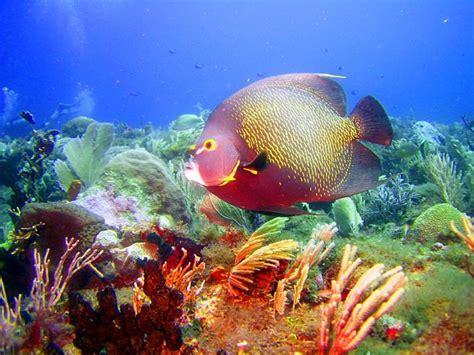 Marine Fish Wallpaper Free saltwater fish wallpapers free wallpapersafari