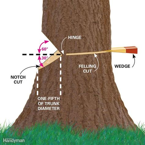 how to cut a tree cut a tree safely and other tree cutting tips