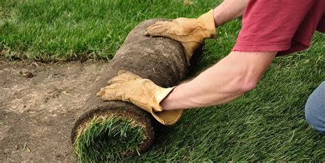 how to lay sod landscaping network