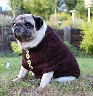 elizabeth pug 17 best images about pug knits and crochet on for dogs neck warmer and