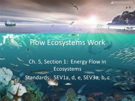 section energy flow in ecosystems unit 2 a ch 5 s1 energy flow in ecosystems