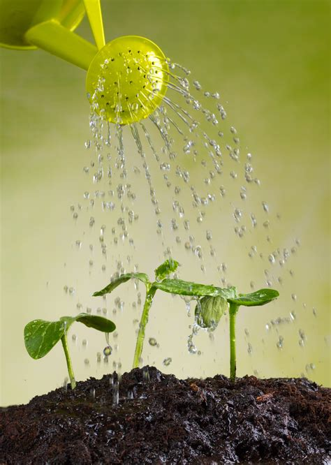 watering your vegetable garden for healthy plants the
