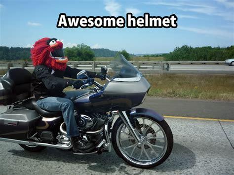 animal motocross helmet animal motorcycle helmet cover by terra perkins hee