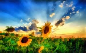 sunflowers in kansas breath taking cool pics pinterest