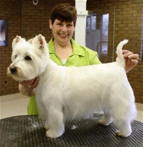 get westies hair white how can you improve your grooming results get the basics