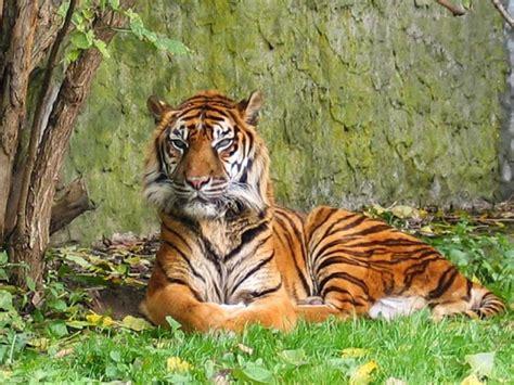 imagenes de animales herbivoros y carnivoros tus imagenes animales carn 237 voros