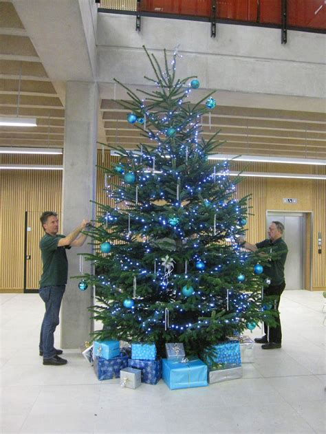 12ft tree images of trees office landscapes