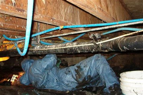 Wet Carpet In Basement How To Dry by Crawlspace Sewage Flooded Cleanup Leak Cost
