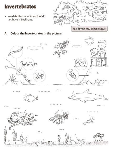 free printable worksheets vertebrates invertebrates anthonyfournier invertebrates worksheet