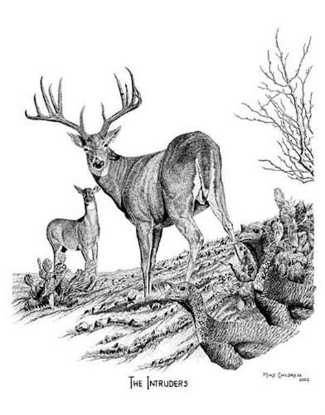 Mike Childress Art :: Pen and Ink Drawings Whitetail Buck Drawings