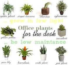 best desk plants 12 for the office bloomberg simple 20 office desk plants design decoration of best