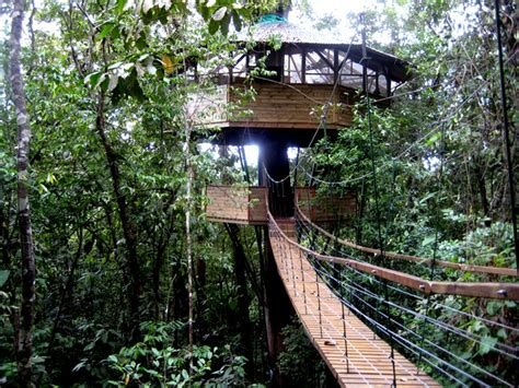 costa rica tree house living abroad in costa rica 187 quien is mas treehouse life in the costa rican trees