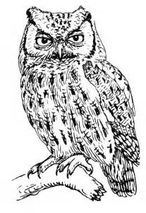 Screech Owl Coloring Page Animals Town Animals Color