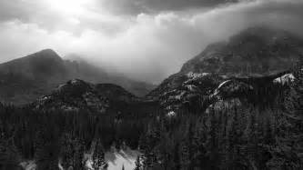 Black And White Black And White Download Free Black And White Forest Wallpaper