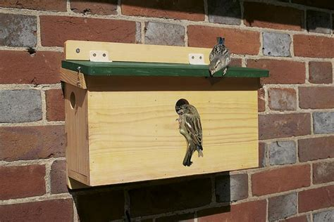 house sparrow terrace fsc nest box nhbs