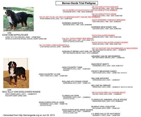 theme names for litter of puppies litter c wcc s bernese mountain dog puppies