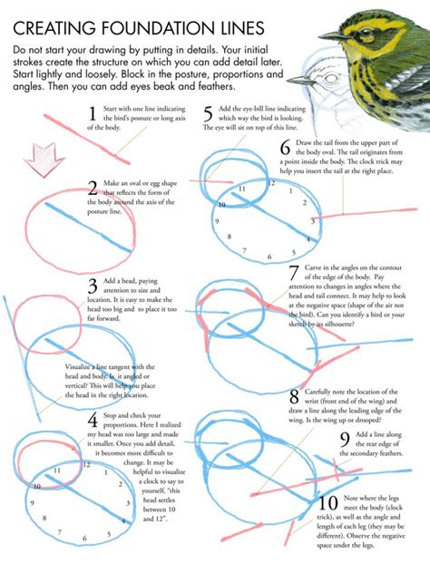 how to draw doodle birds drawing birds tutorial