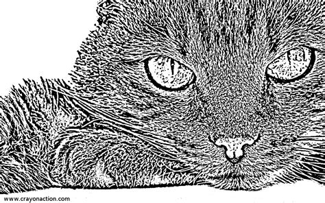 cat face coloring page crayon action coloring pages