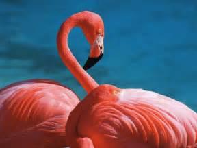 Sleeping pink flamingos wallpaper forwallpaper com