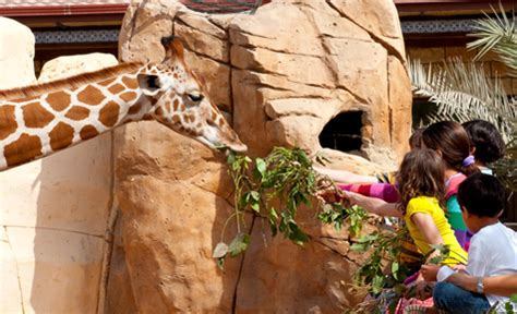 emirates zoo ticket offers wildlife rich experience at emirates park zoo