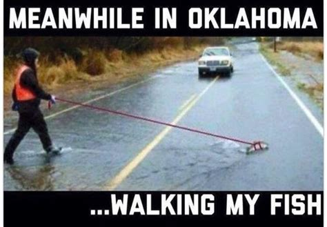 Okc Memes - 34 best images about oklahoma meme on pinterest jokes