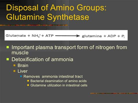 How To Detox Ammonia From Brain by Amino Acid Catabolism 2