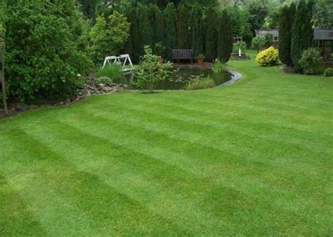 prati da giardino erba per giardino prato