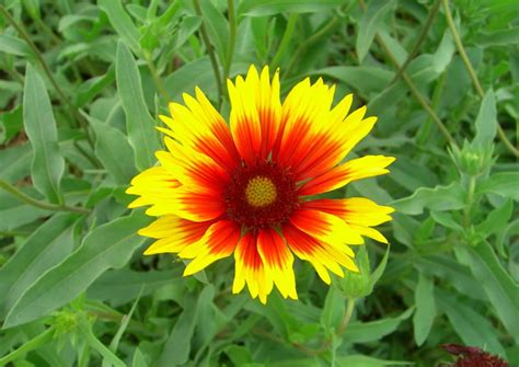 flower picture blanket flower
