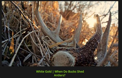 Best Places To Find Shed Antlers by Best Places To Find Shed Antlers Archives Bone Collector
