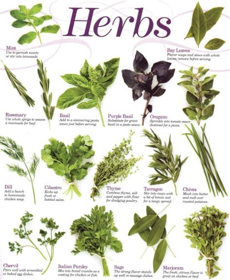 herbs chart herbs