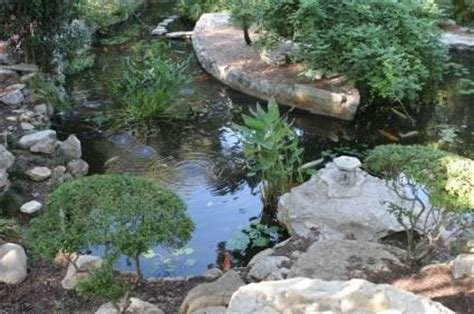 Backyard Designs For Dogs Garden Ponds