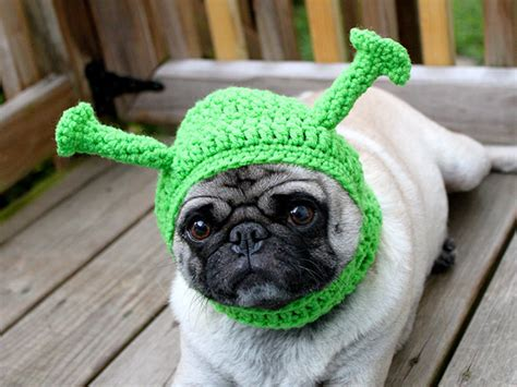 pugs hats 17 sad pug looks even sadder in hats