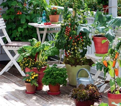 Cottage Garden: How to plant veggies
