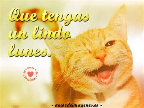imagenes feliz lunes con gatos im 225 genes de gatitos tiernos y llenos de amor