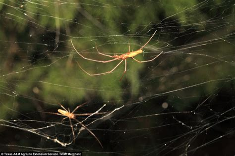 Web Snob Weekly Up Get The From Web Snob by Thousands Of Spiders Spin A Web Through