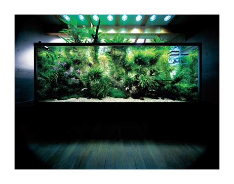 How To Design Home Lighting ada nature aquarium gallery miyabi aqua design